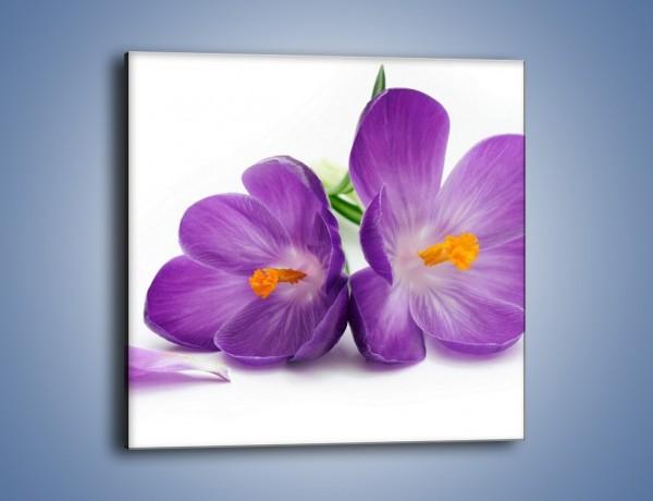 Obraz na płótnie – Kwiatek dla dziewczynki – jednoczęściowy kwadratowy K195