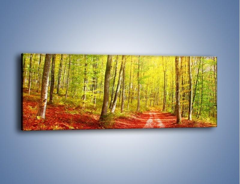 Obraz na płótnie – Brzózki liście i las – jednoczęściowy panoramiczny KN1345A