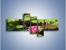 Obraz na płótnie – Ciemno-różowy nenufar na wodzie – pięcioczęściowy K014W5
