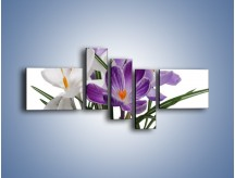 Obraz na płótnie – Biało-fioletowe krokusy – pięcioczęściowy K020W5