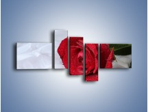 Obraz na płótnie – Bordowa róża na białej pościeli – pięcioczęściowy K1023W5