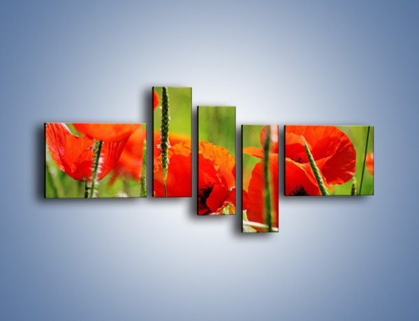Obraz na płótnie – Wiosna w makach – pięcioczęściowy K341W5