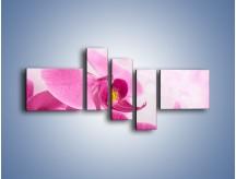Obraz na płótnie – Ciemny róż w storczyku – pięcioczęściowy K588W5