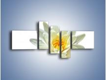 Obraz na płótnie – Biel z pomarańczą w kwiecie – pięcioczęściowy K674W5