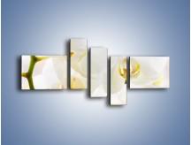 Obraz na płótnie – Białe storczyki blisko siebie – pięcioczęściowy K811W5