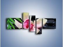 Obraz na płótnie – Cudny kwiat na pierwszym planie – pięcioczęściowy K951W5