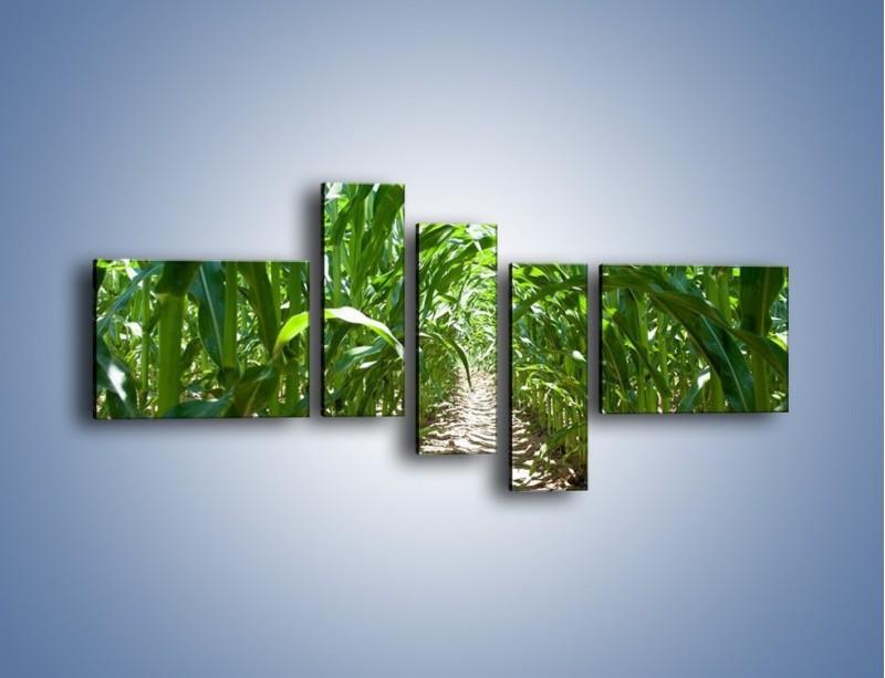 Obraz na płótnie – Labirynt z łodyg – pięcioczęściowy KN036W5