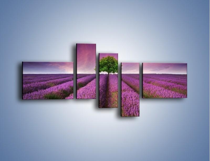 Obraz na płótnie – Droga lawendową do drzewa – pięcioczęściowy KN1158AW5