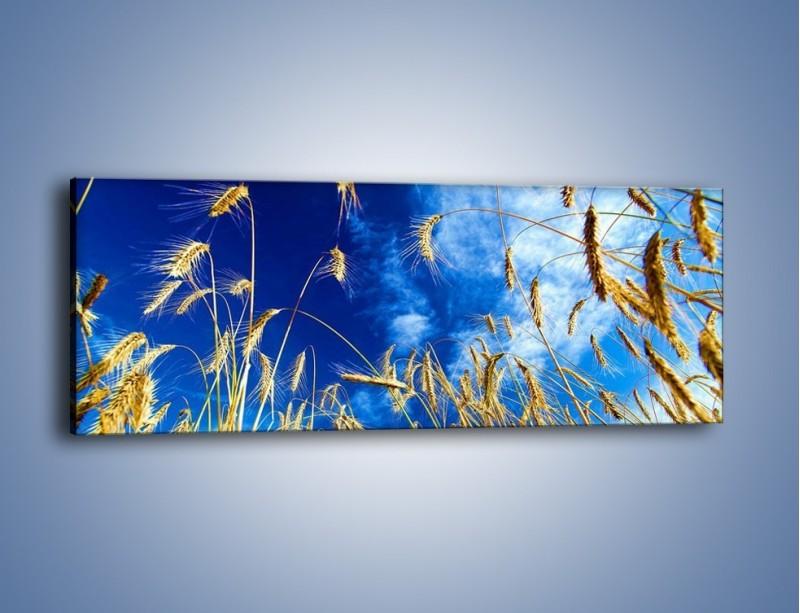 Obraz na płótnie – Zboże w niebie – jednoczęściowy panoramiczny KN139