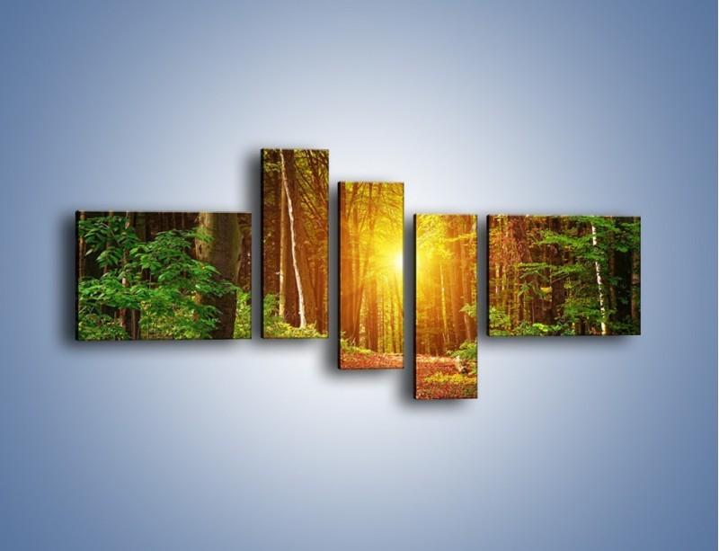 Obraz na płótnie – Polski krajobraz leśny – pięcioczęściowy KN1257AW5