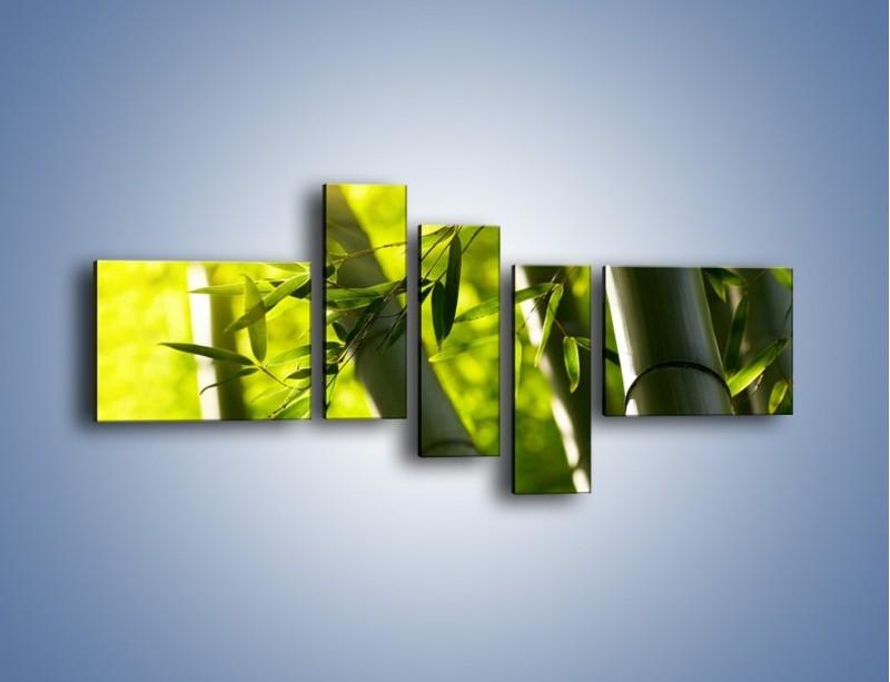 Obraz na płótnie – Twarde łodygi bambusa – pięcioczęściowy KN1314AW5