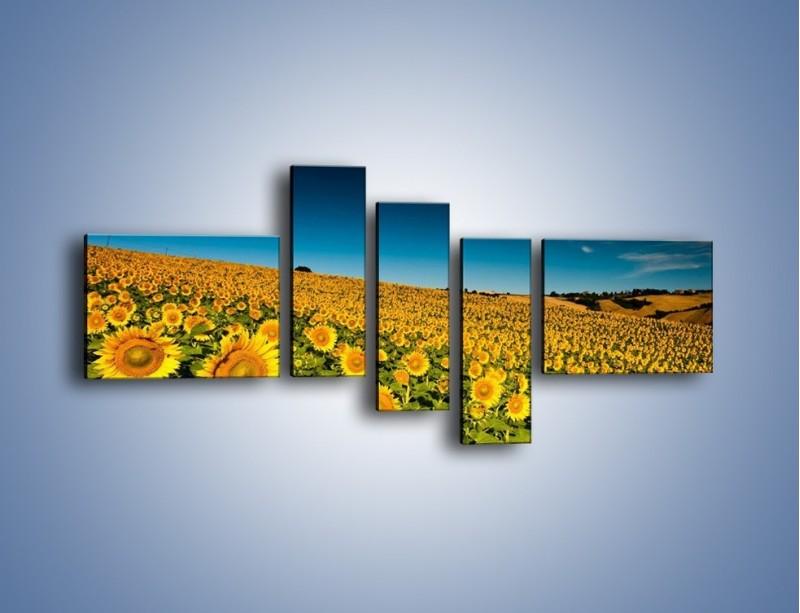 Obraz na płótnie – Słonecznikowe uśmiechnięte główki – pięcioczęściowy KN205W5