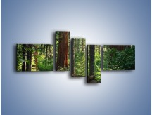 Obraz na płótnie – Chodźmy do lasu – pięcioczęściowy KN611W5