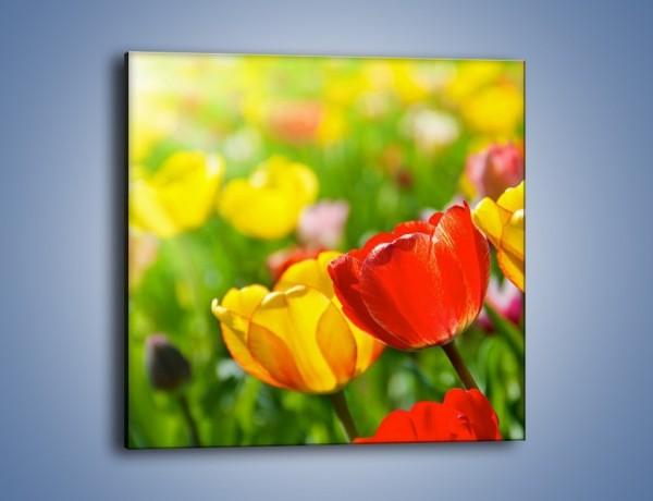 Obraz na płótnie – Wiosenne piękno w tulipanach – jednoczęściowy kwadratowy K213