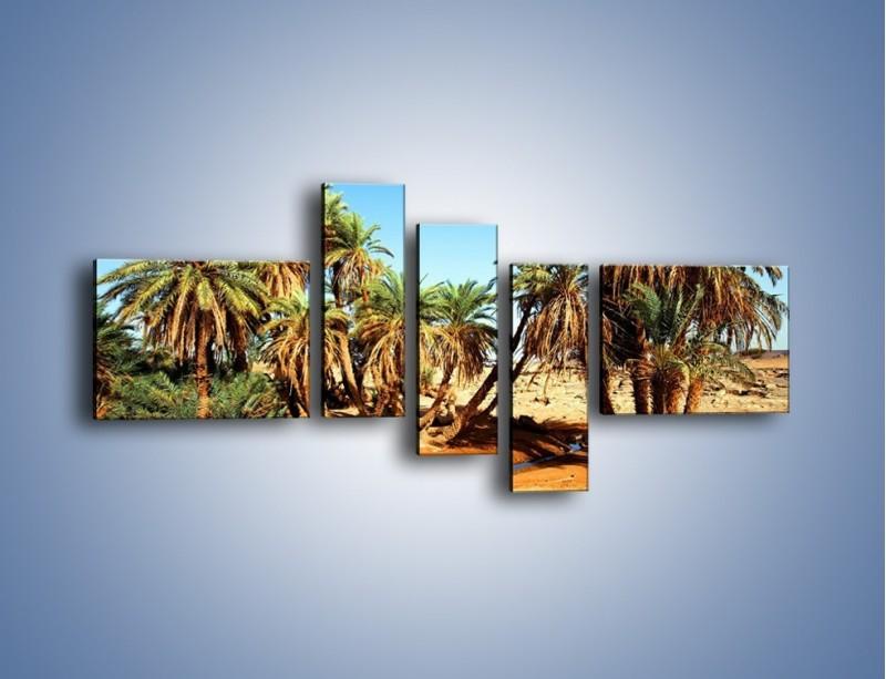 Obraz na płótnie – Palmowa rodzina w komplecie – pięcioczęściowy KN809W5