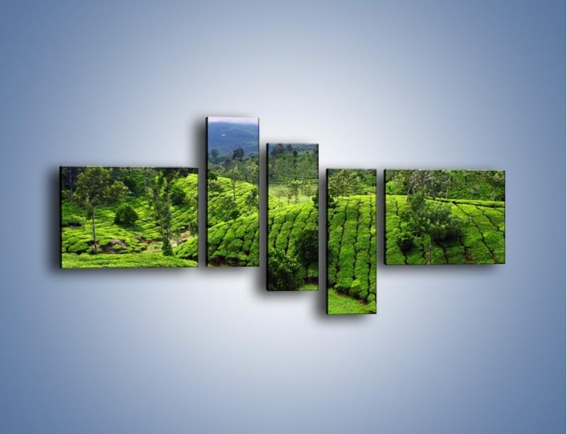 Obraz na płótnie – Rozległa zielona kraina – pięcioczęściowy KN872W5