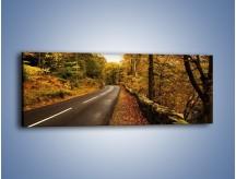Obraz na płótnie – Asfaltową droga przez las – jednoczęściowy panoramiczny KN169
