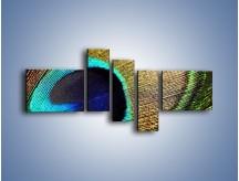 Obraz na płótnie – Cudowne pawie oko – pięcioczęściowy O048W5