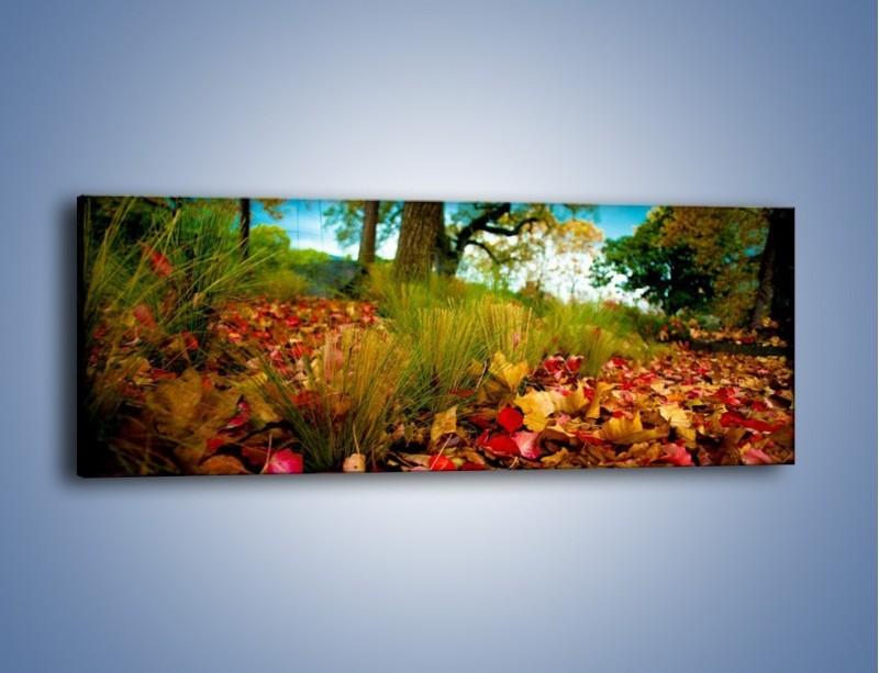 Obraz na płótnie – Droga usłana liśćmi – jednoczęściowy panoramiczny KN172