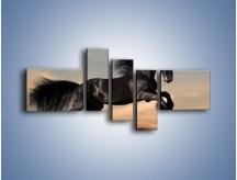 Obraz na płótnie – Czarny koń w galopie – pięcioczęściowy Z008W5