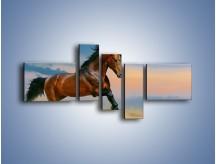 Obraz na płótnie – Brązowy koń na pustyni – pięcioczęściowy Z011W5
