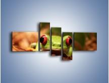 Obraz na płótnie – Bystre oczka małej żabki – pięcioczęściowy Z023W5