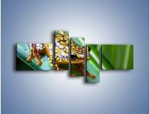 Obraz na płótnie – Kolorowy płaz na liściu – pięcioczęściowy Z026W5