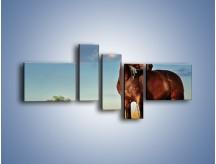 Obraz na płótnie – Koń-symbol siły i spokoju – pięcioczęściowy Z054W5