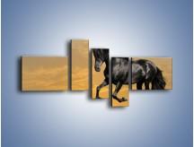 Obraz na płótnie – Bieg z koniem po polanie – pięcioczęściowy Z057W5