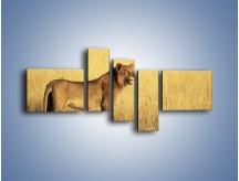 Obraz na płótnie – Czujny wzrok lwicy – pięcioczęściowy Z091W5