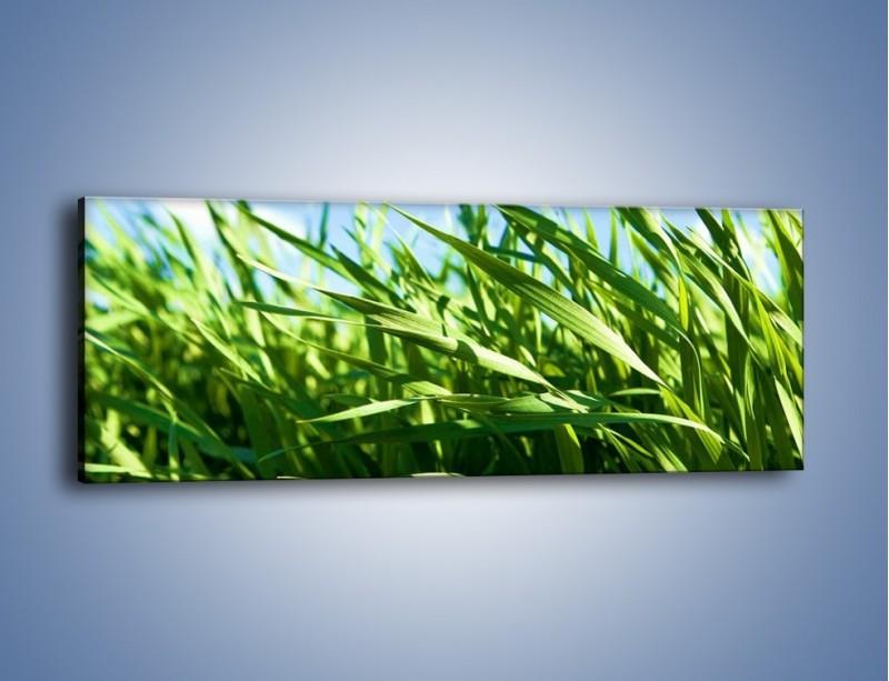 Obraz na płótnie – Wiatr w łodygach – jednoczęściowy panoramiczny KN176