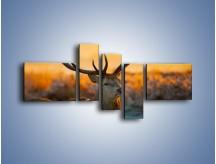 Obraz na płótnie – Ciężkie poroże jelenia – pięcioczęściowy Z165W5
