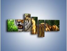 Obraz na płótnie – Cała duma tygrysa – pięcioczęściowy Z199W5