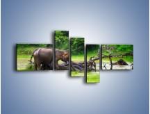 Obraz na płótnie – Kąpiel ze słoniem – pięcioczęściowy Z216W5
