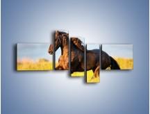 Obraz na płótnie – Dziki koń i jego mięśnie – pięcioczęściowy Z232W5