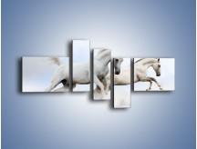 Obraz na płótnie – Białe konie i biały śnieg – pięcioczęściowy Z239W5