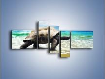 Obraz na płótnie – Jak tu nie kochać żółwi – pięcioczęściowy Z251W5