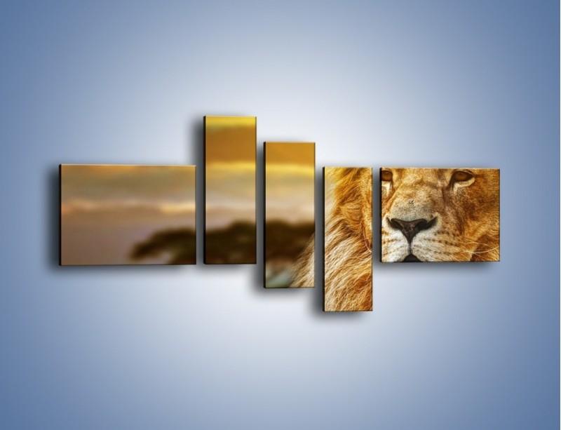 Obraz na płótnie – Dojrzały wiek lwa – pięcioczęściowy Z303W5