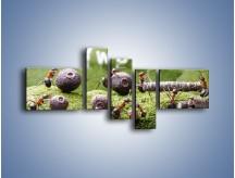 Obraz na płótnie – Ciężka praca mrówek – pięcioczęściowy Z308W5