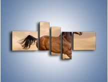 Obraz na płótnie – Koń który nie chce się zatrzymać – pięcioczęściowy Z314W5