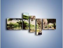Obraz na płótnie – Cała zwinność geparda – pięcioczęściowy Z315W5