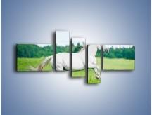 Obraz na płótnie – Biały koń i leśna polana – pięcioczęściowy Z317W5