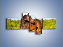 Obraz na płótnie – Koń w lawendowym polu – pięcioczęściowy Z340W5