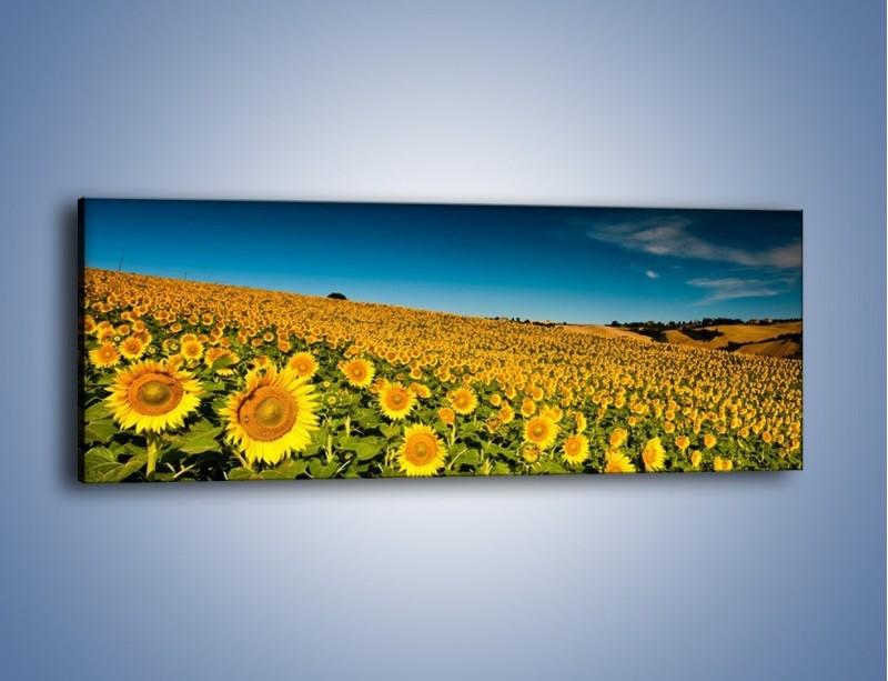 Obraz na płótnie – Słonecznikowe uśmiechnięte główki – jednoczęściowy panoramiczny KN205