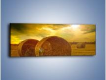 Obraz na płótnie – Belkowe oczy na polu – jednoczęściowy panoramiczny KN207