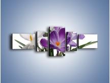 Obraz na płótnie – Biało-fioletowe krokusy – pięcioczęściowy K020W6