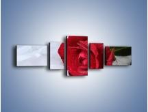Obraz na płótnie – Bordowa róża na białej pościeli – pięcioczęściowy K1023W6