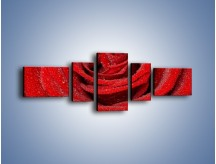 Obraz na płótnie – Czerwona moc w róży – pięcioczęściowy K171W6