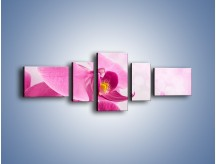 Obraz na płótnie – Ciemny róż w storczyku – pięcioczęściowy K588W6