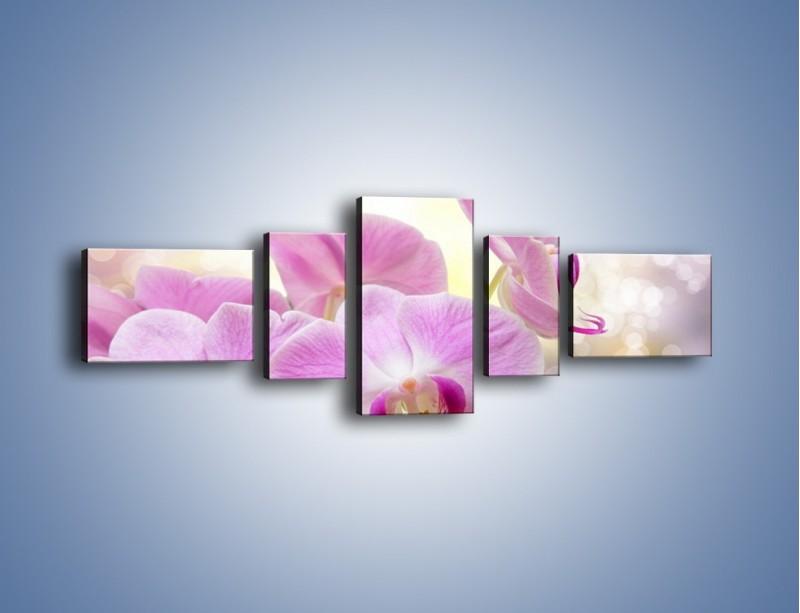 Obraz na płótnie – Lila kwiaty o poranku – pięcioczęściowy K976W6